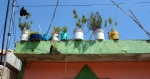 Bucket Planters sit on the roof of a house. (Photo/Kendra Yost)