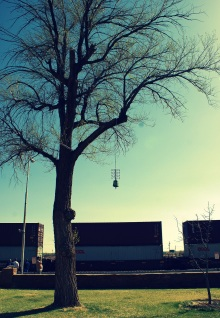 A Paolo Soleri bell hangs from a tree at La Posada Hotel in Winslow Arizona.
