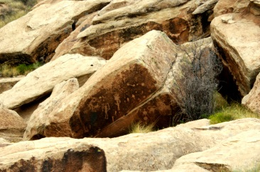 Petroglyphs at Puerco Pueblo in the Petrified Forest National Monument. Photo/Kendra Yost