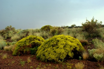 Plants flourish in the Petrified Forest National Monument. Photo/Kendra Yost